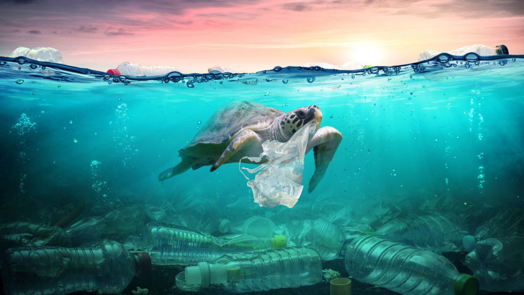 turtle-plastic-ocean